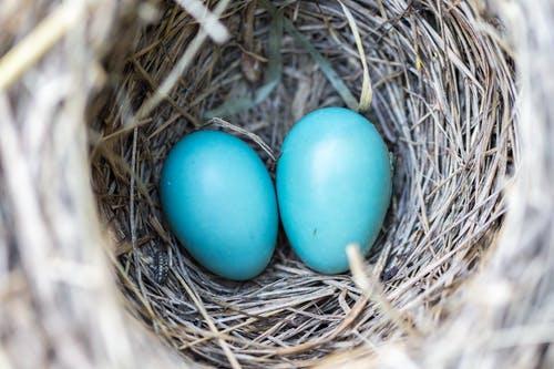 Eieren in groten getale uitbroeden? Schaf een broedmachine aan